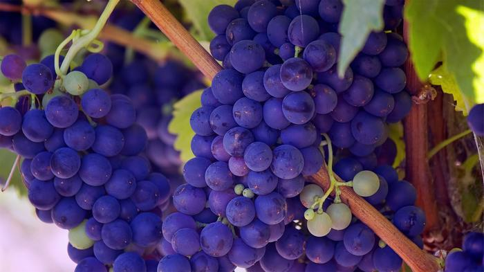 Viinirypäleet Laihdutus